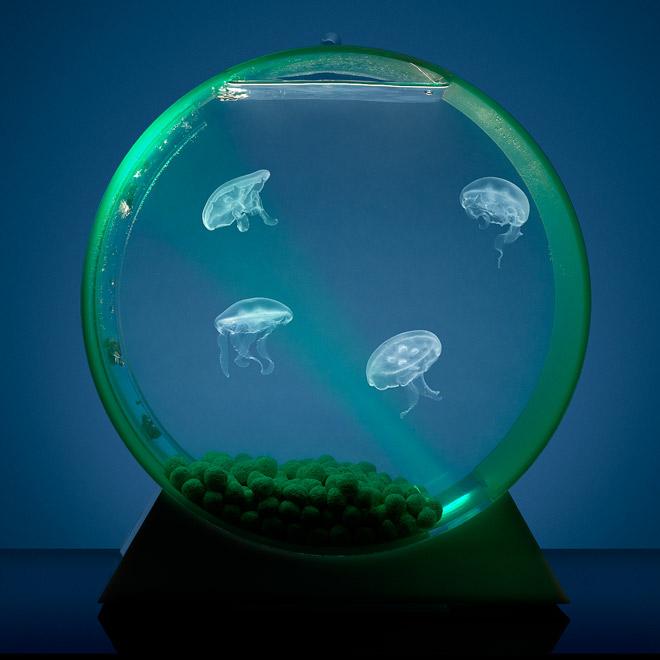 akvárium pro medúzy
